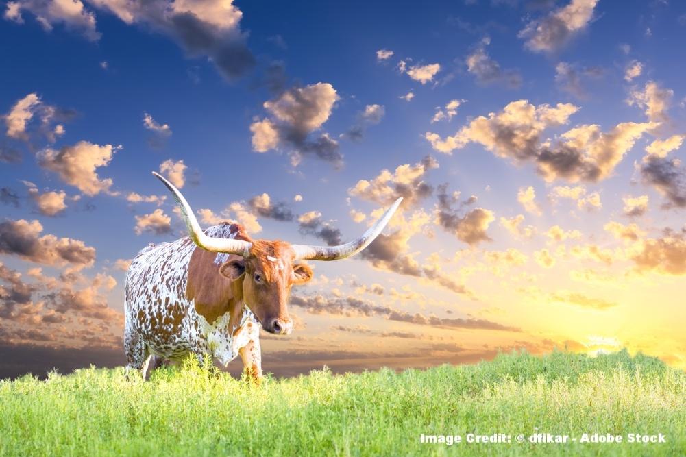 Bastrop-Texas.jpeg