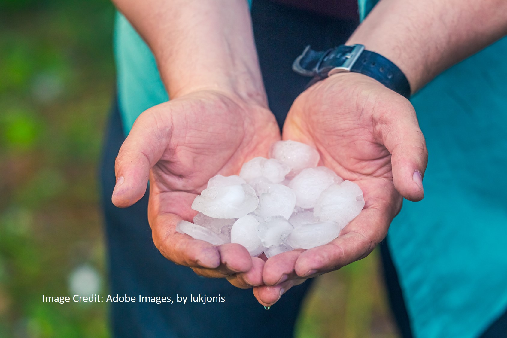 large hail stones in the hands of a man just after a hail storm