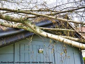 treestormcredit